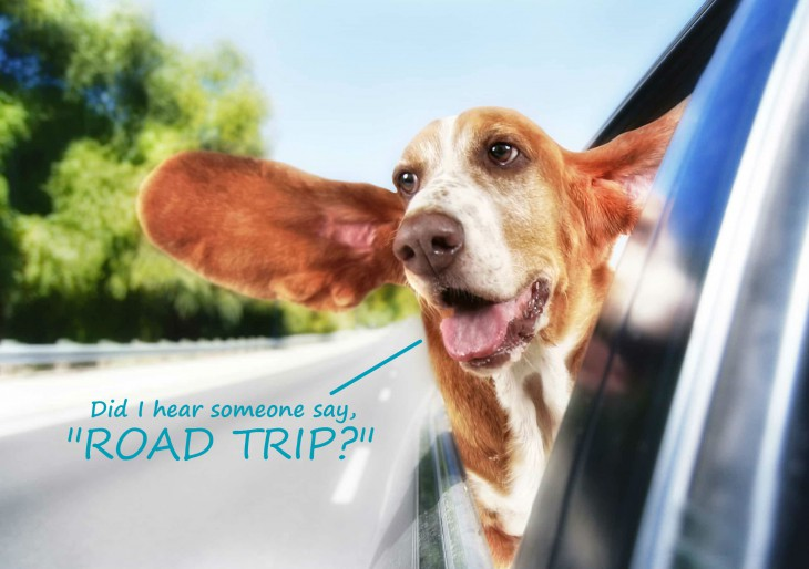 Are You Going On A RoadTrip With Your Dog?