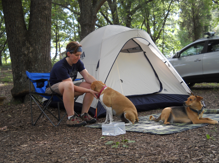 What should we pay attention to when camping wiht pets ?